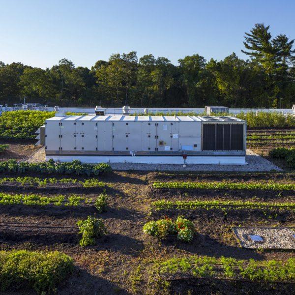 Generator in urban rooftop garden